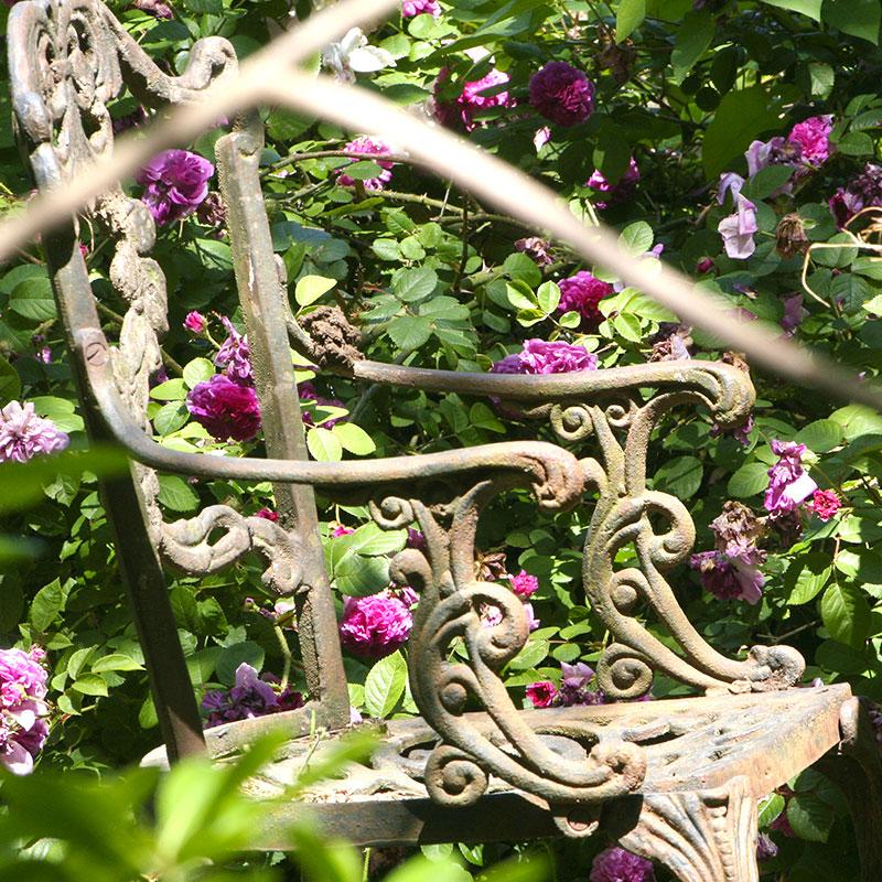 A quiet corner in the Happy Hen b&b garden